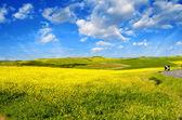 Paisagem campestre com campos e prados — Foto Stock