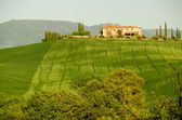 Typical farmhouse building in Tuscany in middle of vineyard in spring, Italy — Stockfoto