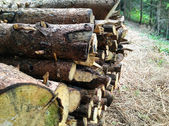 Pile of wood logs ready for winter - landscape exterior — Stock Photo