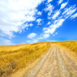 Wheat yellow field — Stock Photo