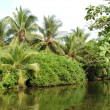 The river and green palms and bushes, Sri Lanka — Stock Photo