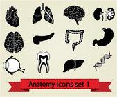 Icônes d'anatomie set 1 — Vecteur