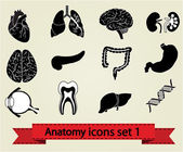 Anatomy icons set 1 — Stock Vector