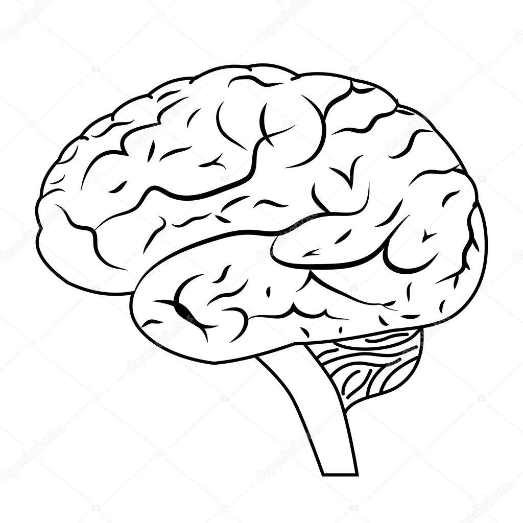 cerebro  u2014 archivo im u00e1genes vectoriales  u00a9 leshkasmok  12109303