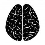 Brain 2. — Stock Vector
