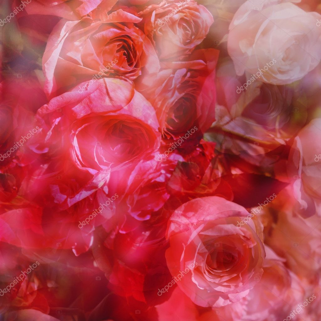 Abstract roses background in red and pink colors — Stock Photo #11200843
