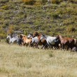 Stock Photo: Horses rises on mountain slope