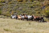 Horses rises on a mountain slope — Stock Photo