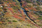 Montaña multicolor — Foto de Stock
