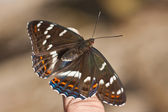 Butterfly - the top view — Stock Photo
