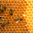 Top view of the working bees on honeycells. - Stockfoto
