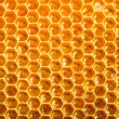 Fresh honey in comb - Stockfoto