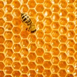 Close up view of the working bees on honeycells. - Foto de Stock
