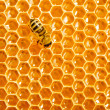 Close up view of the working bees on honeycells. — Stockfoto