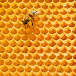 Stock Photo: Top view of the working bees on honeycells.