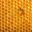 Close up view of the working bees on honeycells. — Stock Photo #11215065