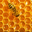 Stock Photo: Close up view of the working bees on honeycells.