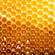 Fresh honey in comb — Stock Photo #11215074