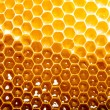 Foto de Stock  : Fresh honey in comb