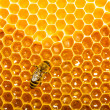 Royalty-Free Stock Photo: Top view of the working bees on honeycells.