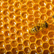 Close up view of the working bees on honeycells. — Stock Photo #11215086