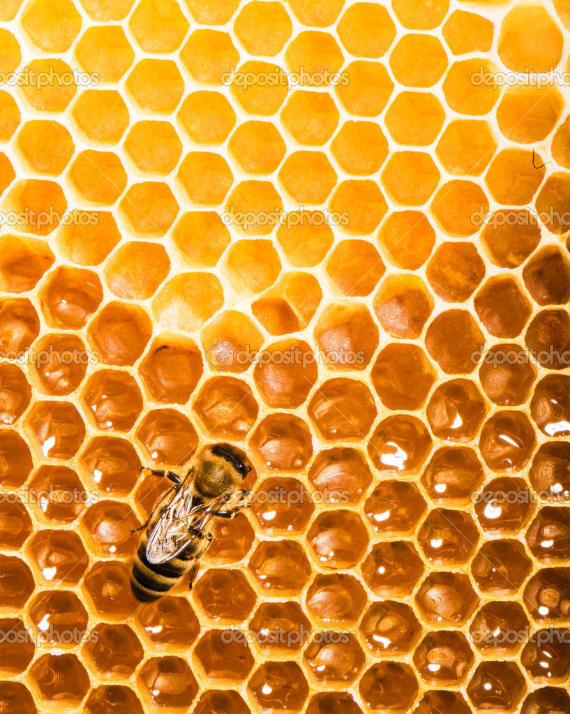 Fresh honey in comb — Stockfoto #11214930