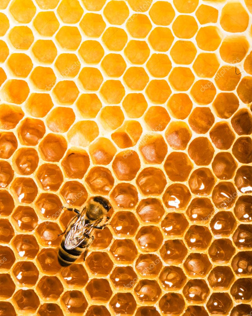 Fresh honey in comb  Stockfoto #11214930