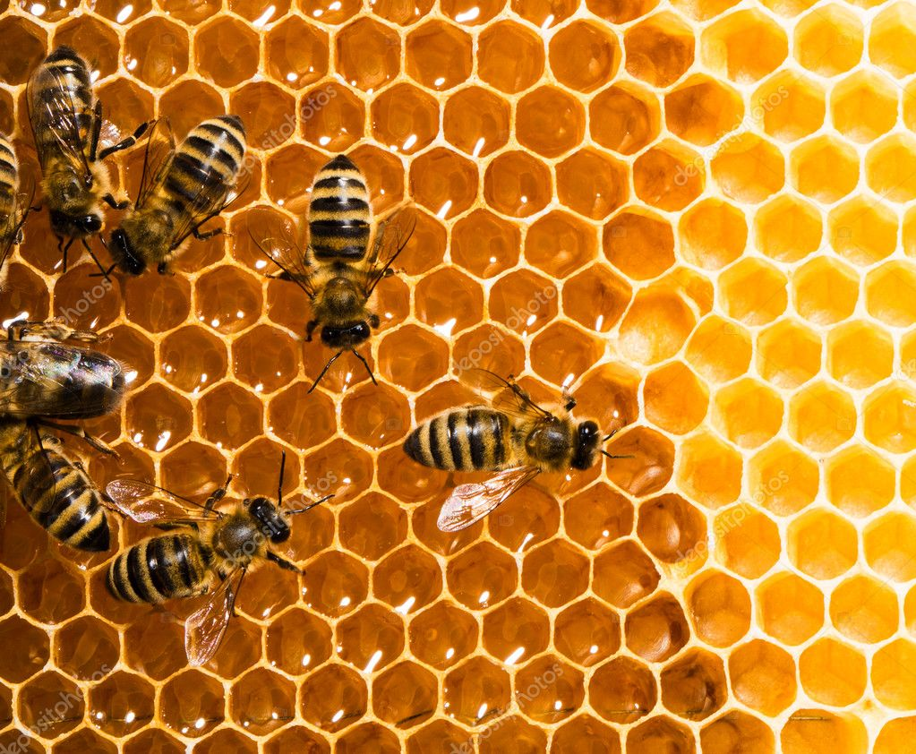 Top view of the working bees on honeycells. — Stock Photo #11214933