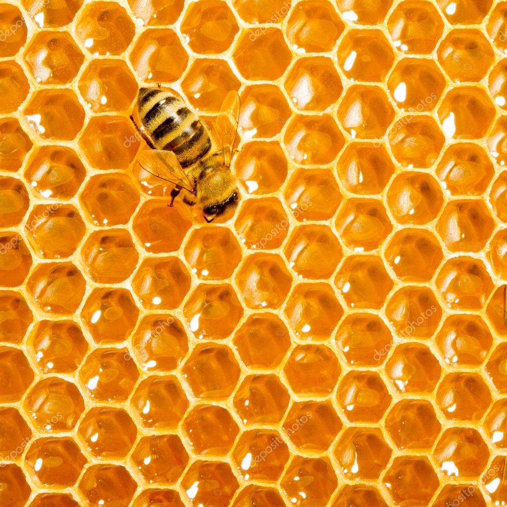 Close up view of the working bees on honeycells. — Stock Photo #11215054