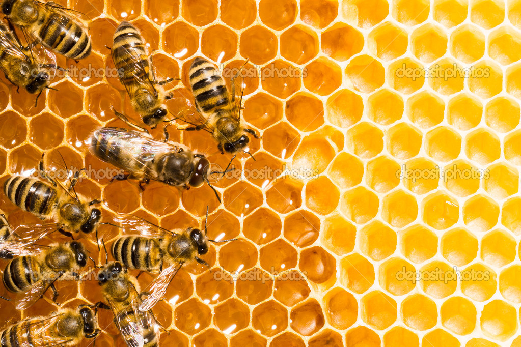 Close up view of the working bees on honeycells.  Stock Photo #11215078