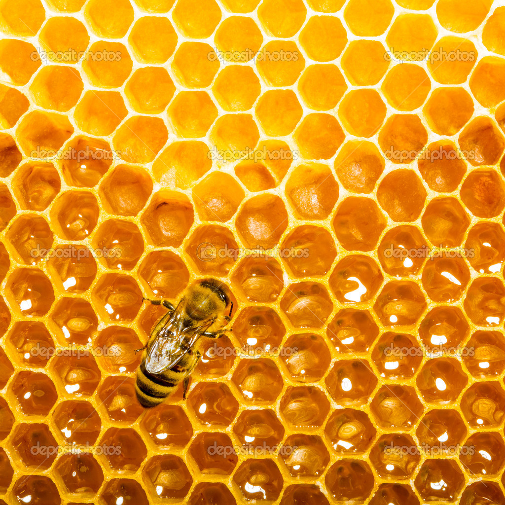 Top view of the working bees on honeycells.  Stock Photo #11215083