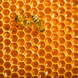 Close up view of the working bees on honeycells. - Stockfoto