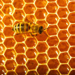 Stock Photo: One bee works on honeycomb