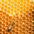Top view of the working bees on honeycells. - Stok fotoğraf