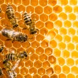 Close up view of the working bees on honeycells. - Стоковая фотография