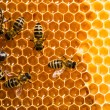 Top view of the working bees on honeycells. - Foto Stock