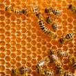 Close up view of the working bees on honeycells. - 图库照片