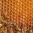 Bees works on honeycombs - 图库照片