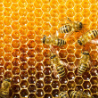 Bees work on honeycomb - 图库照片