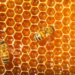 Royalty-Free Stock Photo: Bees works on honeycombs