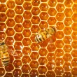 Bees works on honeycombs - Foto Stock