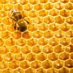 trabajo de las abejas en panal — Foto de Stock   #11375851
