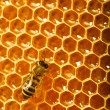One bee works on honeycomb — Stockfoto