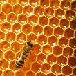 One bee works on honeycomb — Stock Photo