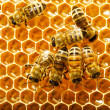 Stock Photo: Bees works on honeycombs