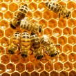 Bees works on honeycombs — Stock Photo #11375872