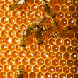 Bees works on honeycombs - Stock fotografie