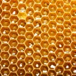 Fresh honey in comb — 图库照片 #11375884