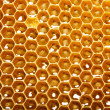 Fresh honey in comb - Stock fotografie