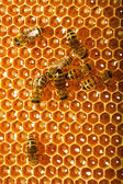 Bees works on honeycombs — Stock Photo